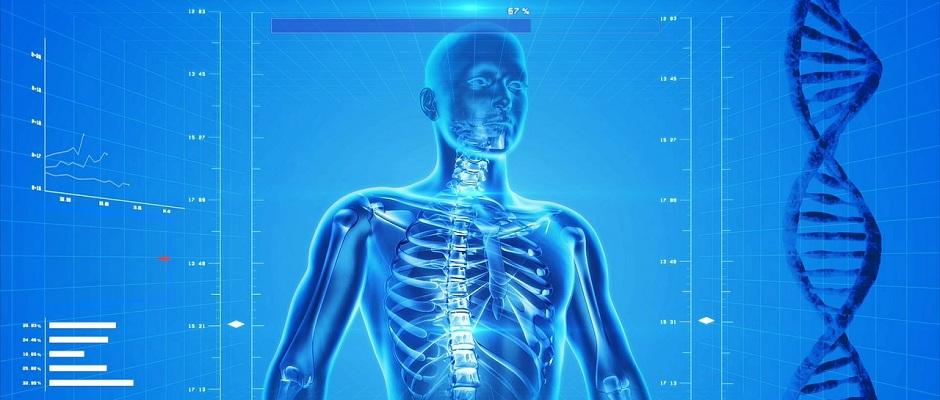 Anatomie Skelett Mensch