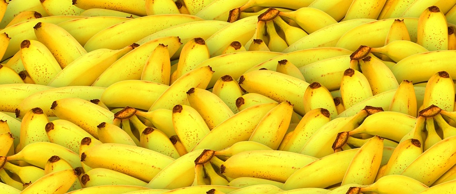Bananen (Musa)